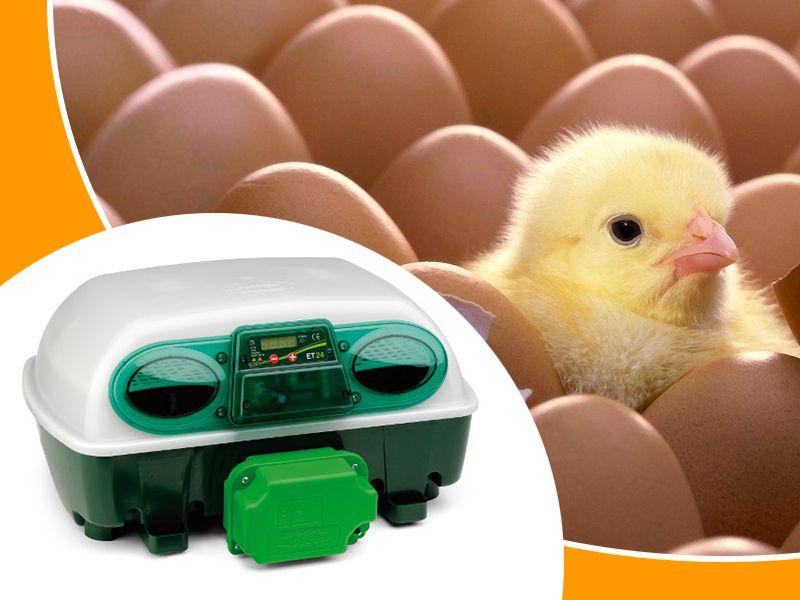 offerta su incubatrici automatiche da 24 e 49 uova