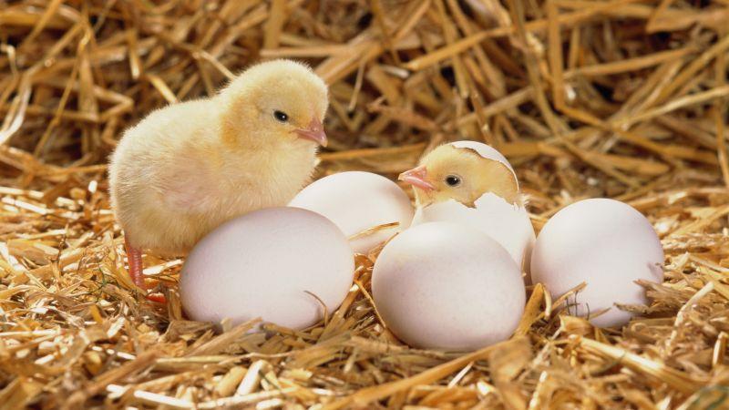 offerta vendita incubatrici automatiche  - occasione produzione incubatrici vicenza