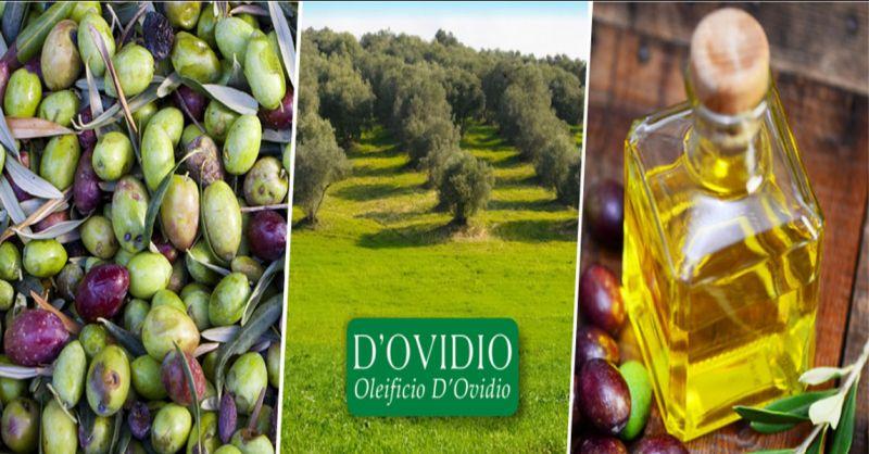 Oleificio D'Ovidio Promozione produzione artigianale olio extravergine made Italy Abruzzo