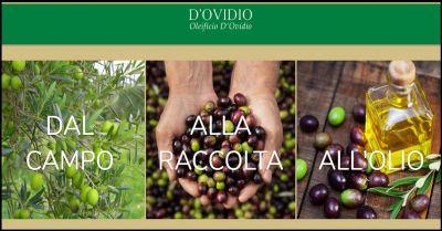 oleificio dovidio occasione produzione olio extravergine artigianale made in italy abruzzo