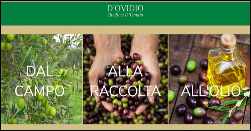 Oleificio D'Ovidio Occasione produzione olio extravergine artigianale made in Italy Abruzzo