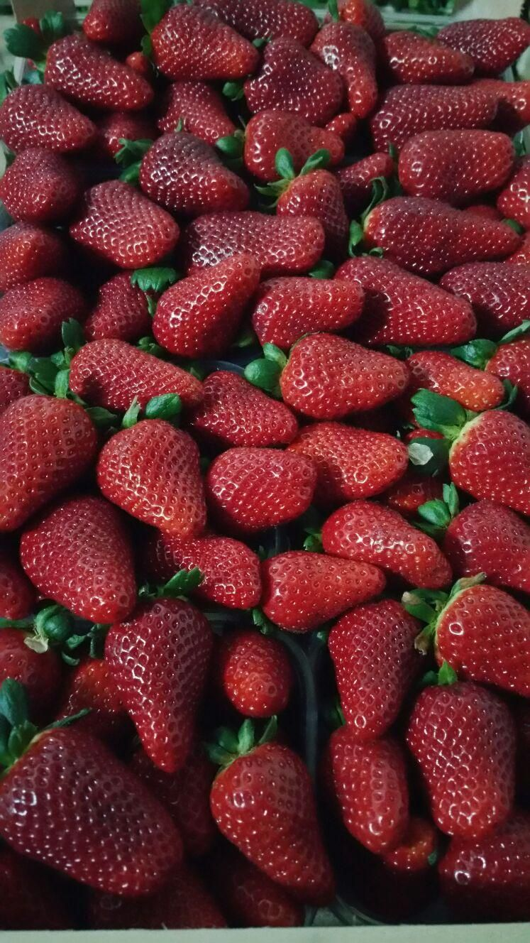 da peppe e lucia trovi delle deliziose fragole