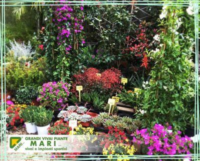 offerta cura fiori e piante promozione cura giardini e spazi verdi vivai mari