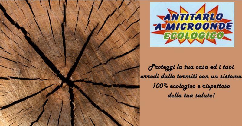 ARTE VENETA - Offerta servizio di rimozione termiti Treviso