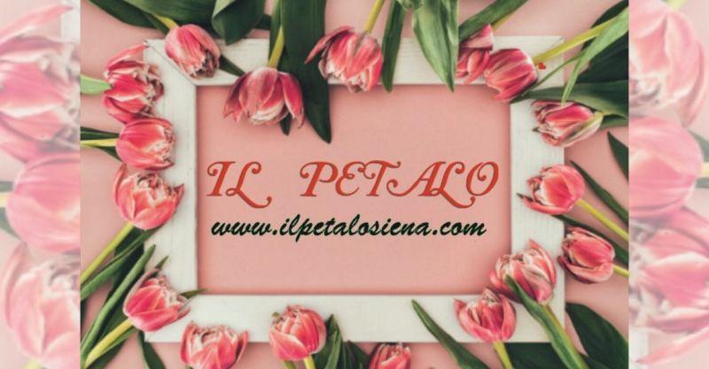 offerta vendita di piante fiori freschi Siena - IL PETALO consegna piante e fiori Siena