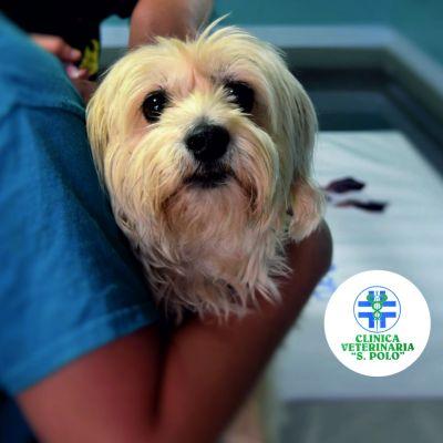 offerta chirurgia veterinari san polo brescia promozione clinica veterinaria san polo brescia
