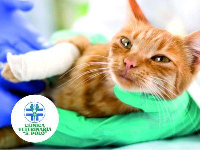 offerta ortopedia veterinaria san polo brescia promozione clinica veterinaria s polo brescia