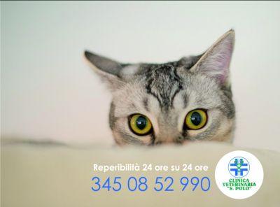 servizio veterinario 24h clinica san polo brescia clinica veterinaria reperibile 24 ore su 24