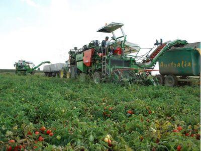 offerta commercio prodotti per agricoltura convenzionale promozione verona cda punto verde srl