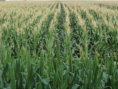 offerta nutrizione e difesa delle piante promozione prodotti a residuo zero e biologici verona