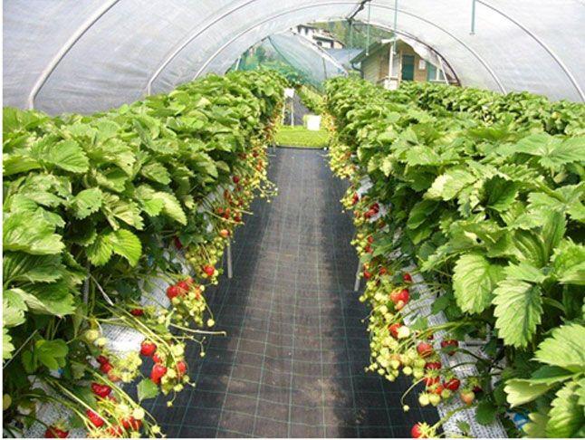 offerta vendita concimi promozione concimi biologici verona cda punto verde srl