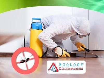 offerta deblattizzazione condomini promozione deblattizzazioni ecology disinfestazioni