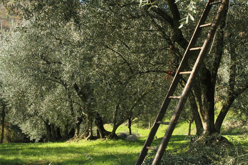 Offerta vendita olio dei Colli Berici - Produzione e vendita vino dei Colli Berici Vicenza
