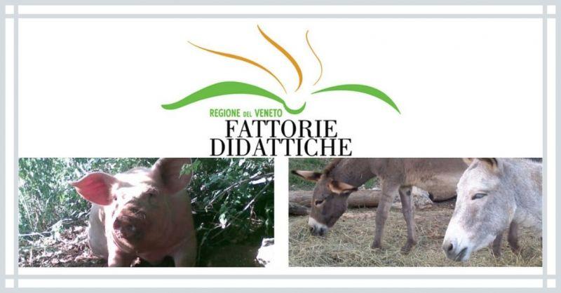 AGRITURISMO DA SAGRARO - Occasione percorsi Didattici sui Colli berici in fattoria didattica