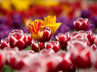 vivaio e vendita fiori siena