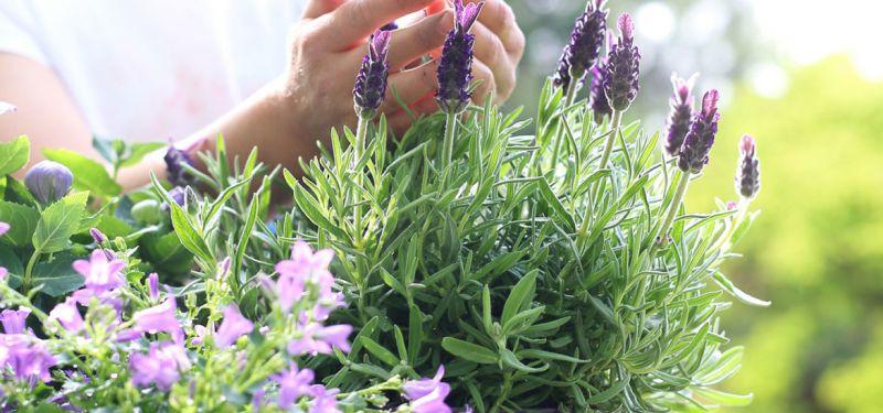 offerta vendita concimi per piante - occasione vendita terricci per fiori e sementi vicenza