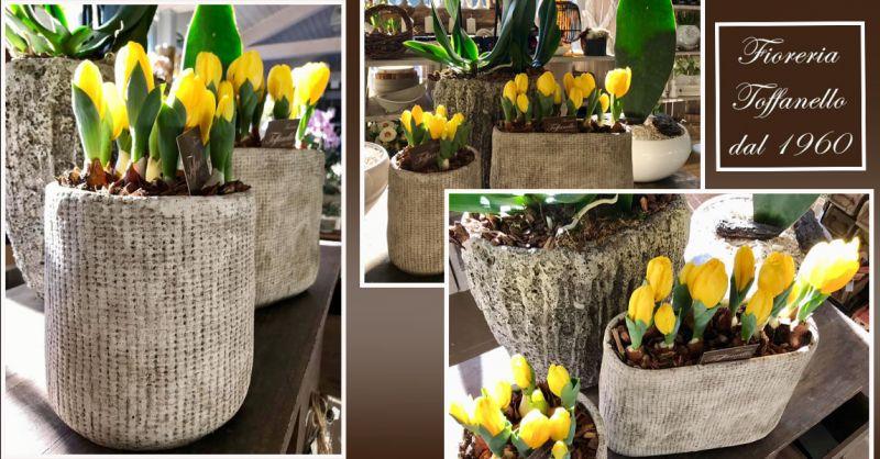 Offerta vendita Bulbi di Tulipano Vicenza - Occasione Bulbi Primaverili Vicenza