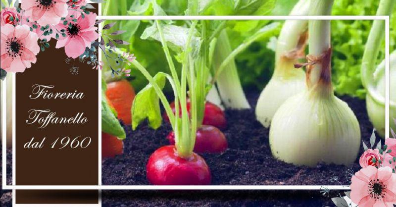 Offerta Vendita Piantine Ortaggi BIO Vicenza - Occasione Concimi BIO alberi da frutto orto