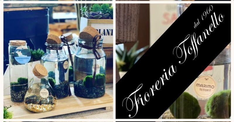 FIORERIA TOFFANELLO - Occasione vendita online MARIMO alga palla in vetro vari formati