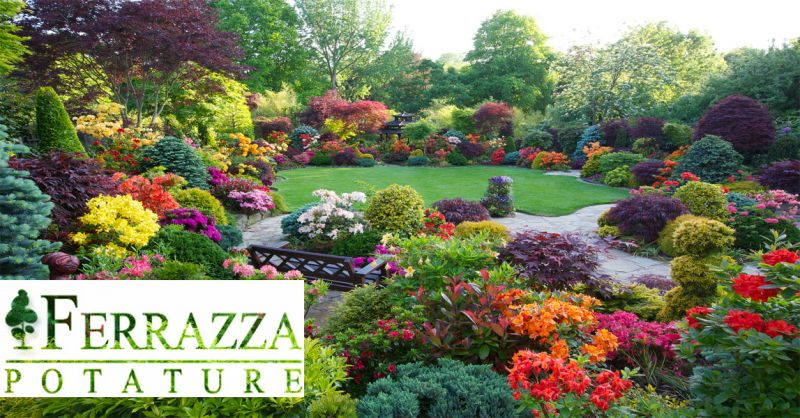offerta progettazione giardini realizzazione Roma - occasione manutenzione giardini Roma