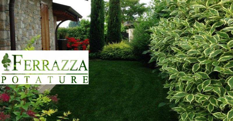 offerta Abbattimento alberi potatura piante Roma - occasione Installazione manti erbosi Roma