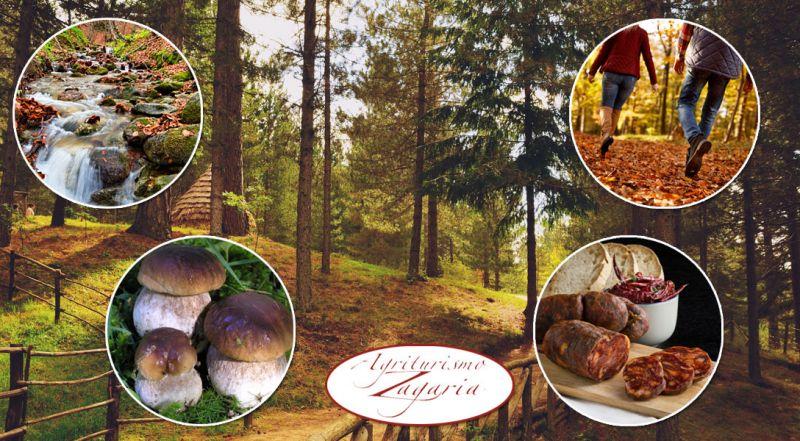 Agriturismo Zagaria -  promozione soggiorno in autunno agriturismo Sila - Offerta vacanza nella natura e sport in calabria