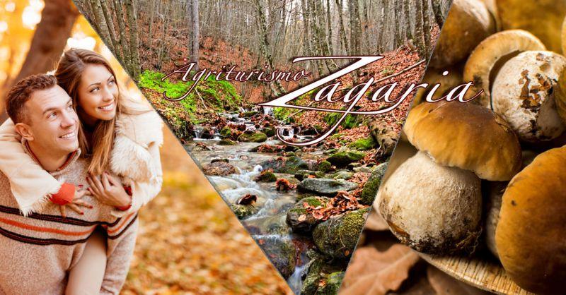 Agriturismo Zagaria – offerta agriturismo vacanza natura e funghi – promozione agriturismo Parco Nazionale della Sila