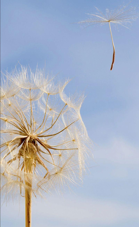 offerta pulizia condotte aria aerauliche promozione sanificazione dellaria verona trento