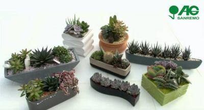 vendita composizioni di piante grasse in vaso