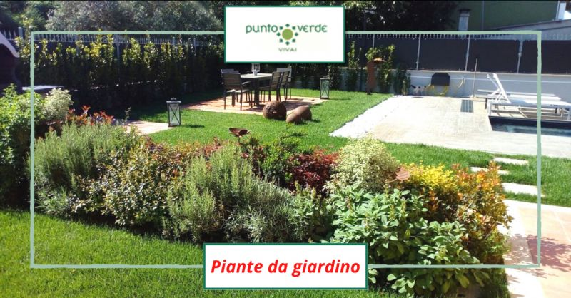 Offerta vendita piante da giardino roma - occasione vendita piante da esterno albano laziale