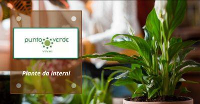 offerta piante da interno roma occasione vendita piante da interno genzano di roma