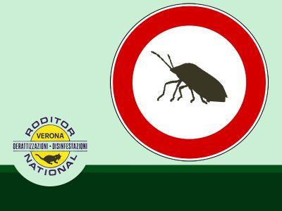 offerta disinfezione contro blatte promozione bonifica contro cimici verona roditor national