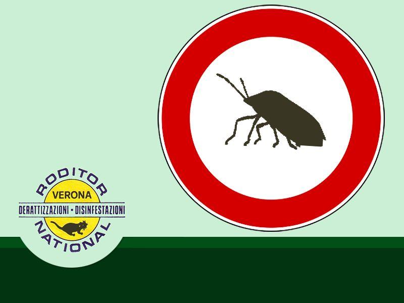 offerta disinfezione contro blatte bonifica contro cimici mantova roditor national