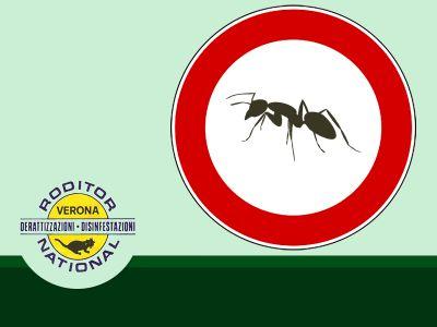 offerta disinfezione contro zanzare bonifica contro formiche verona roditor national