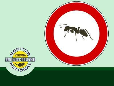 offerta disinfezione contro zanzare promoxione bonifica contro formiche