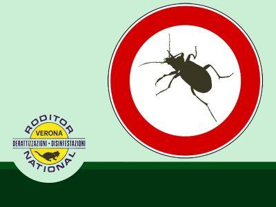 offerta disinfezione contro scarafaggi promozione bonifica contro scarafaggi roditor national