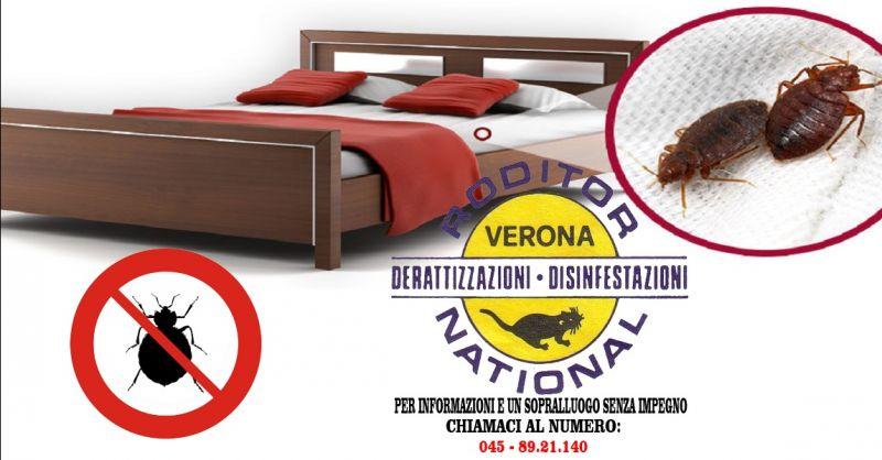 offerta igienizzazione contro le cimici da letto Verona - occasione disinfezione cimici Verona