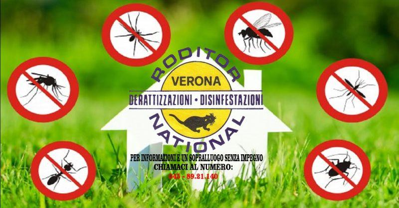 offerta rimozione vespe da case e imprese Verona - occasione disinfestazione da formiche Verona