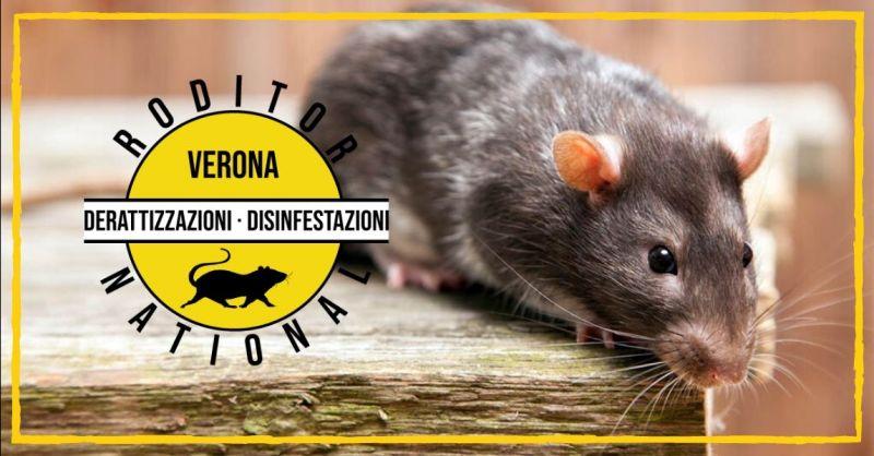 Promozione servizio professionale di derattizzazione Mantova - offerta eliminazione topi Mantova