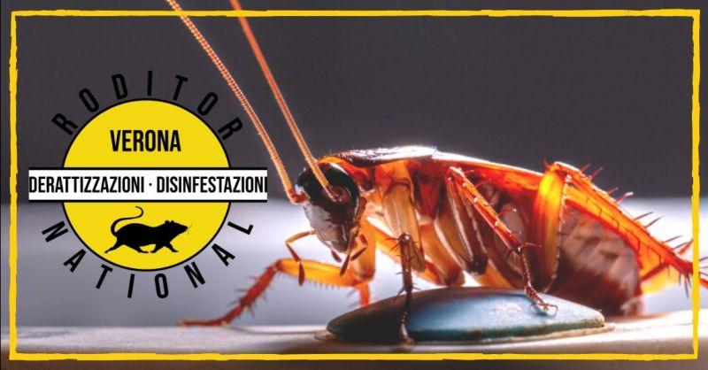 Promozione servizio di deblattizzazione Mantova - offerta disinfestazione di blatte scarafaggi