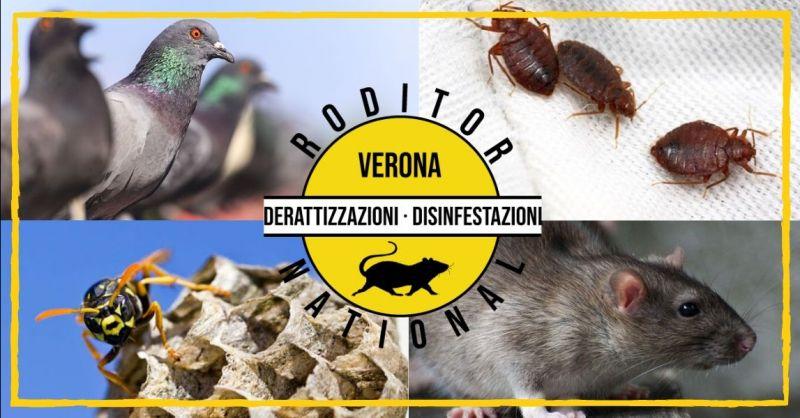 Occasione servizio di allontanamento volatili - offerta disinfestazione cimici da letto Mantova