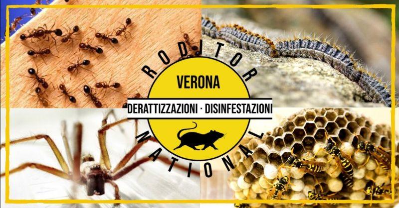 Offerta professionista disinfestazione formiche vespe - offerta eliminazione ragni Mantova