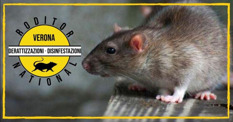 RODITOR NAZIONAL - Promozione servizio di derattizzazione e disinfestazione topi Verona Mantova