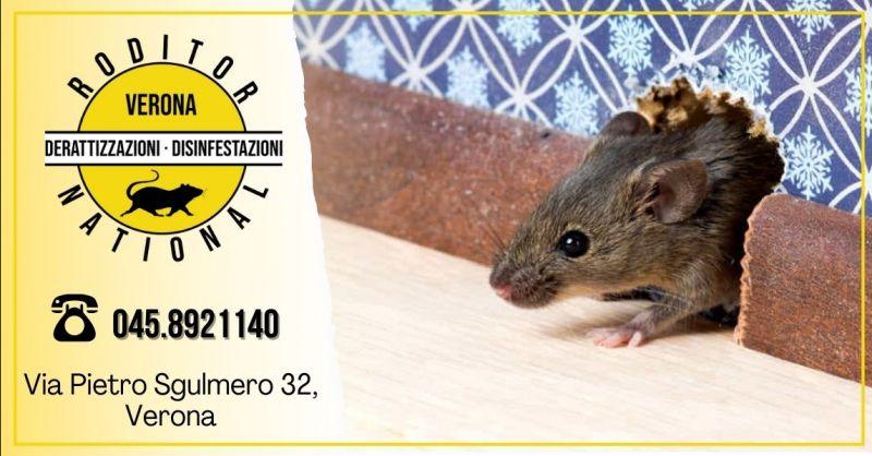 Offerta disinfestazione topi in casa Mantova - Occasione servizio professionale derattizzazione Verona