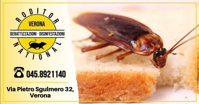 Offerta servizio disinfestazione scarafaggi Mantova - Occasione interventi di deblattizzazione provincia Verona