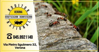 offerta servizio disinfestazione formiche provincia verona occasione disinfestazione zanzare giardino mantova