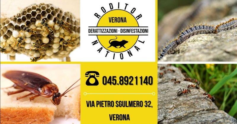 Offerta servizio disinfestazione vespe provincia Verona - Occasione disinfestazione calabroni provincia Mantova
