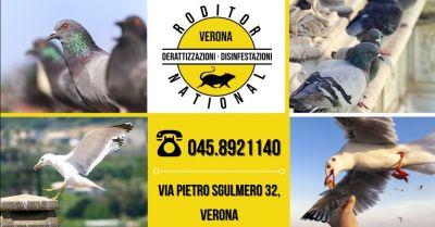 offerta sistemi di allontanamento volatili provincia mantova occasione ditta specializzata allontanamento piccioni