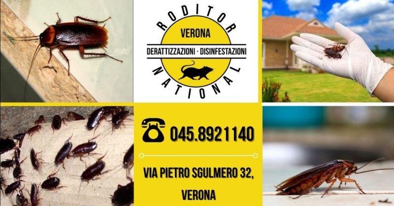 Offerta intervento disinfestazione scarafaggi - Occasione impresa disinfestazione blatte provincia Mantova
