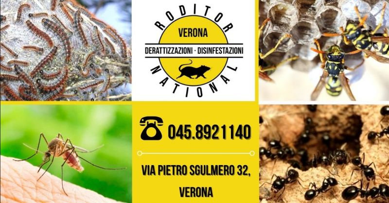 Offerta servizio disinfestazione processionaria - Occasione disinfestazione professionale formiche Verona provincia